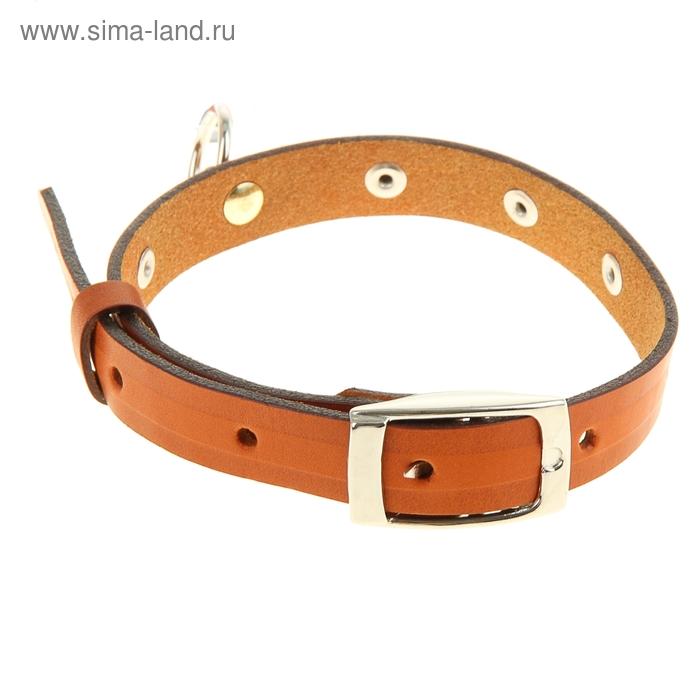 Ошейник кожаный, однослойный, 1,6 см х 45 см, с выносным кольцом, украшенный, микс