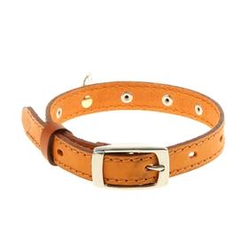 Ошейник кожаный, однослойный, 1,8 см х 45 см, с выносным кольцом, украшенный, микс