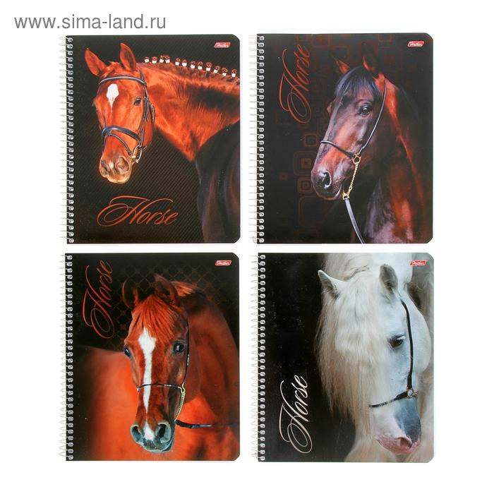 Тетрадь 96 листов клетка на гребне Horses, картонная обложка, 4 вида МИКС