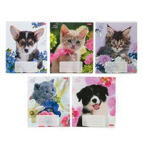 Тетрадь 12 листов в клетку «Любимцы», картонная обложка, 5 видов, МИКС