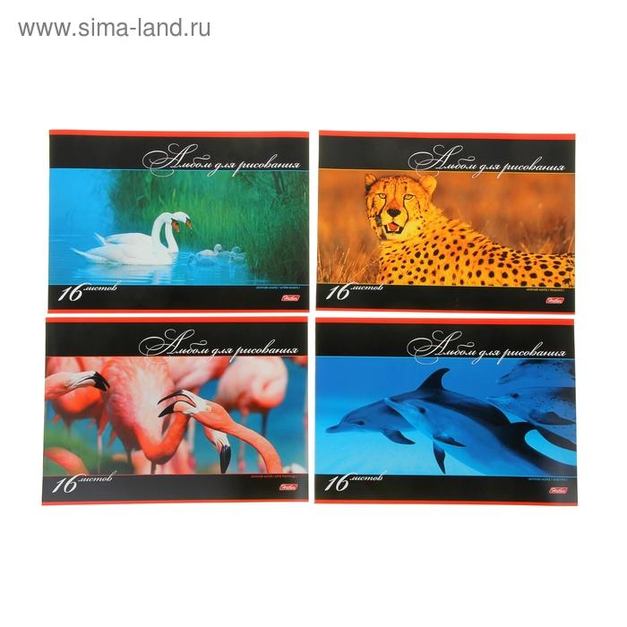 """Альбом для рисования А4, 16 листов на скрепке """"В мире животных"""", обложка картон 185г/м2, блок офсет 100 г/м2, 5 видов МИКС"""