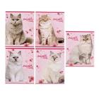 """Тетрадь 12 листов клетка """"Большие кошки"""", обложка картон хромэрзац, 5 видов МИКС"""