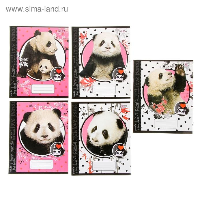 """Тетрадь 48 листов клетка """"Любимая панда"""", картонная обложка, водный лак, 5 видов МИКС"""