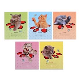 Тетрадь 12 листoв в клетку «Кошки-мышки», картонная обложка, тиснение, МИКС
