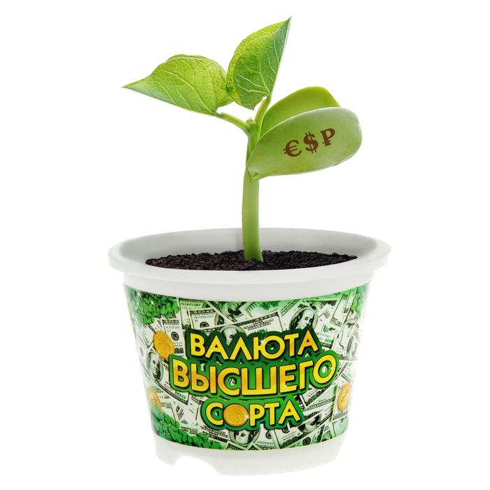 """Растущая трава с волшебными бобами """"Зелень отборная"""""""