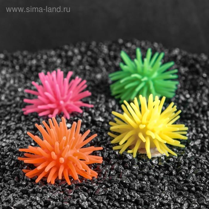 Декоративный анемон для аквариума, микс цветов, 5 х 3,5 см