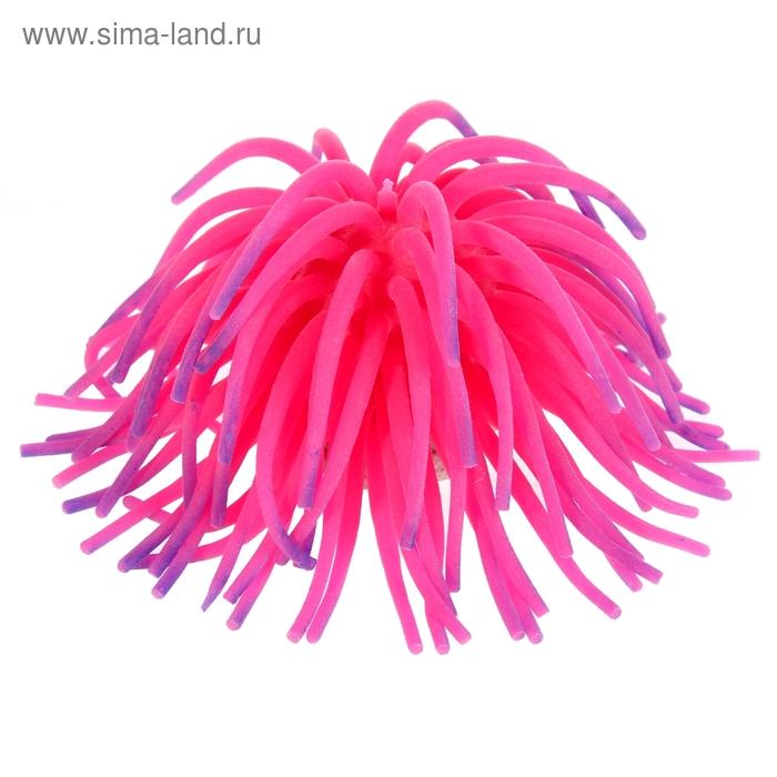 Декоративный анемон для аквариума, микс цветов, 12 х 8 см