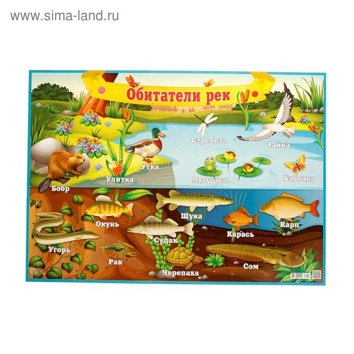 "Плакат ""Обитатели рек"", рыбы, птицы, звери  49х69 см"