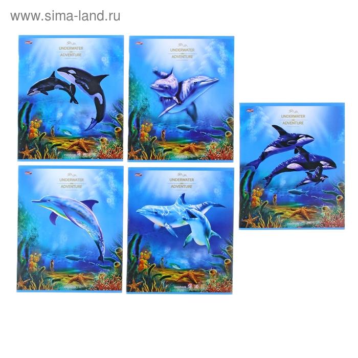"""Тетрадь 36 листов клетка """"Дельфины и косатки"""", обложка картон хромэрзац, 5 видов МИКС"""