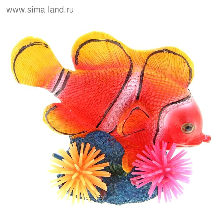 """Распылитель """"Рыба-клоун с кораллами"""", 16 х 9,5 х 15,5 см"""