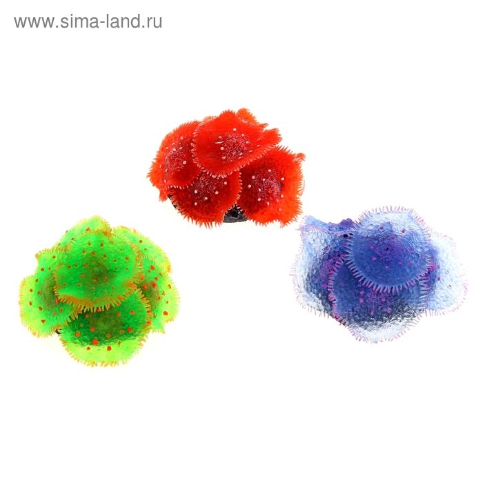Декоративный коралл для аквариума, 8 х 8 х 3 см, микс цветов