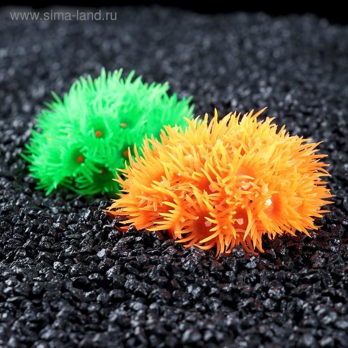 Декоративный коралл для аквариума, 8 х 8 х 4 см, микс цветов