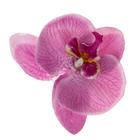 """Зажим """"Орхидея"""", цвет сиреневый"""