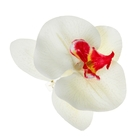 """Зажим """"Орхидея"""", цвет белый"""