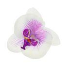 """Зажим """"Орхидея"""", цвет бело-фиолетовый"""