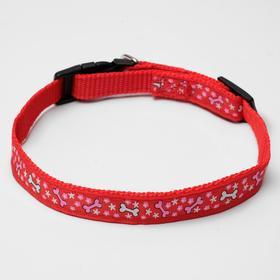 "Nylon dog collar ""Star seeds"", 36 x 1.5 cm, orange"