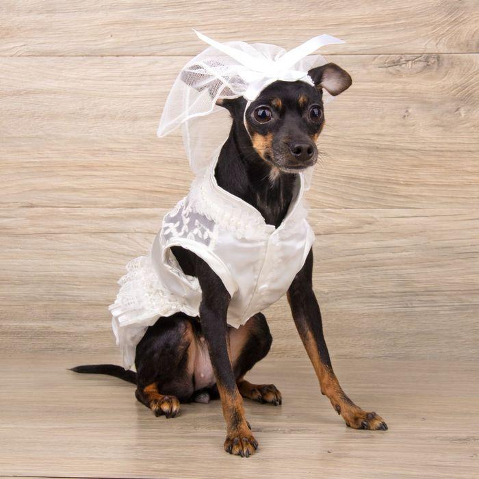"""Платье """"Свадебное"""" с фатой, размер S (длина спинки - 28 см, объем груди - 36 см)"""