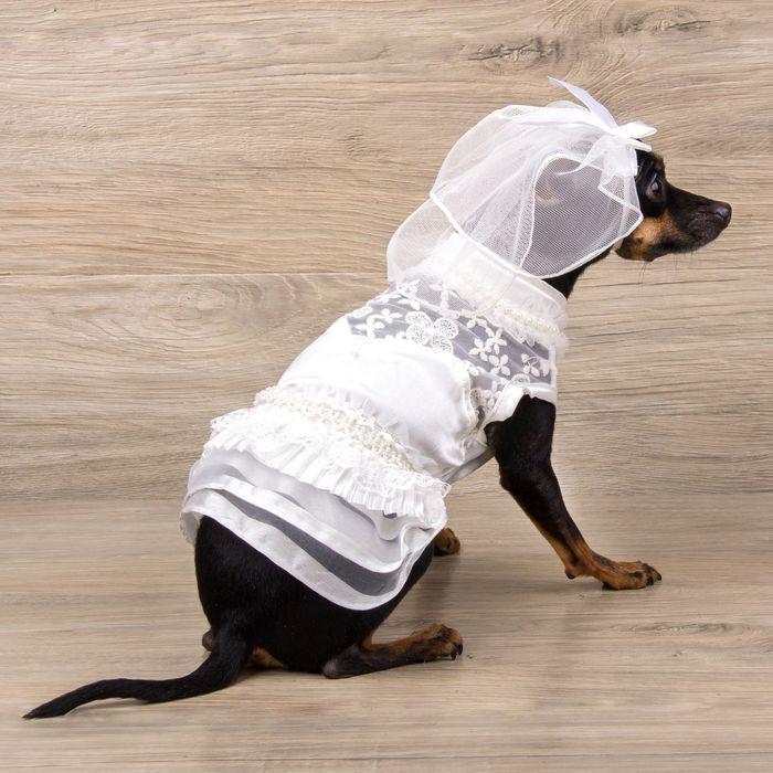 """Платье """"Свадебное"""" с фатой, размер L (длина спинки - 38 см, объем груди - 48 см)"""