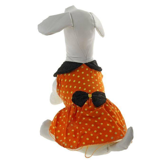 "Платье ""Горошек"", размер XS (длина спинки - 21 см, объем груди - 32 см)"