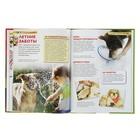 Детская энциклопедия «Собаки и щенки» - фото 106536724