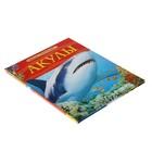 Детская энциклопедия «Акулы» - фото 106536795