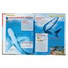 Детская энциклопедия «Акулы» - фото 106536796