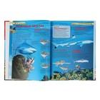 Детская энциклопедия «Акулы» - фото 106536797