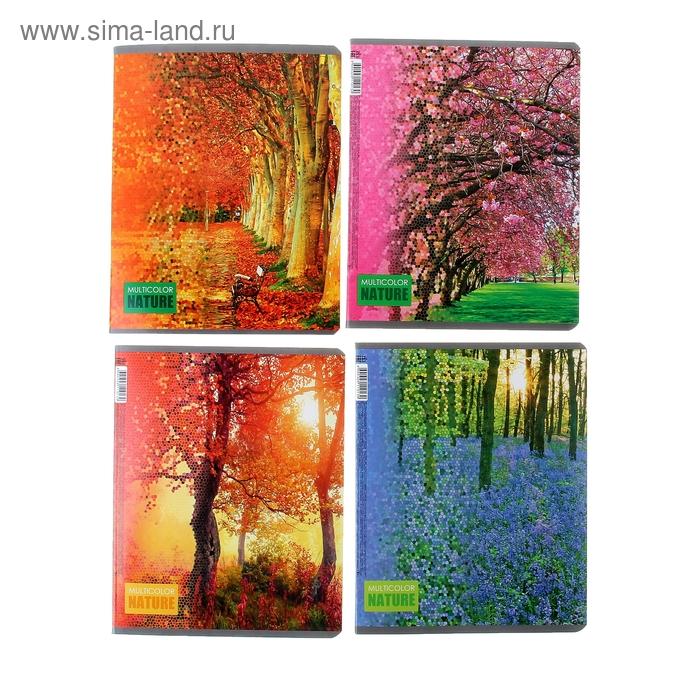 Тетрадь двойная 48 листов клетка Multi Color Nature, картонная обложка, 4 вида МИКС