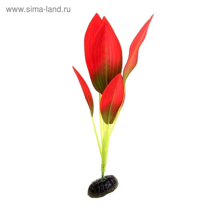 """Растение шелковое """"Эхинодорус Амазонка"""" красно-зеленый 22 см YM-03"""