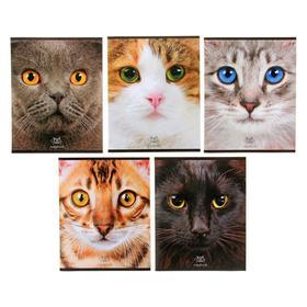Тетрадь 48 листов в клетку «Кошачьи мордочки», картонная обложка, тиснение, 5 видов, МИКС
