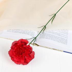 Цветок искусственный 'Гвоздика с кантом' Ош