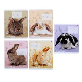 Тетрадь 12 листoв линейка 'Милые крольчата', бумажная обложка, 5 видов МИКС Ош