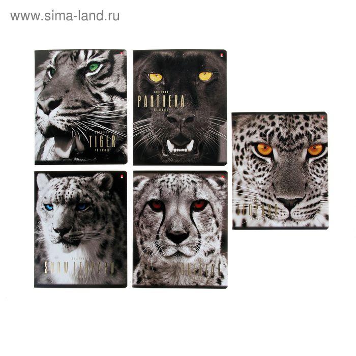 """Тетрадь 48 листов клетка """"Большие кошки"""", картонная обложка, фольга, выборочный лак, 5 видов МИКС"""