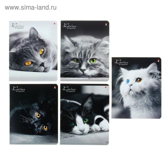 """Тетрадь 48 листов клетка """"Кошки. Яркий взгляд"""", картонная обложка, гибридный лак, 5 видов МИКС"""