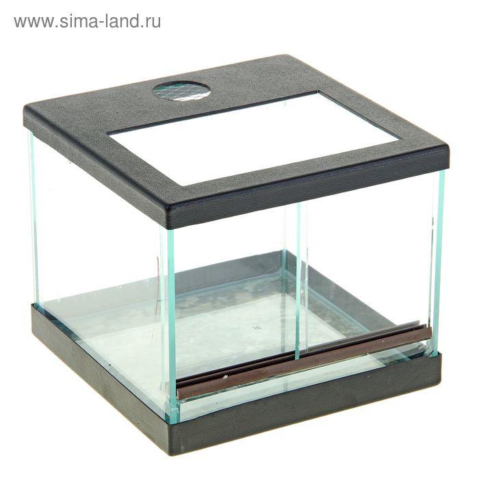 Террариум 5 литров  19х19х14 см