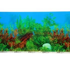 """Фон для аквариума двухсторонний """"Растения с корягой/ Растения с камнями"""" 30см*15м"""