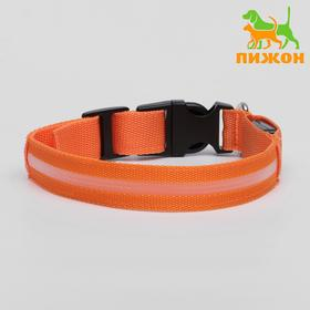 Collar with backlight, M, 40-45 cm, 3 modes glow, orange