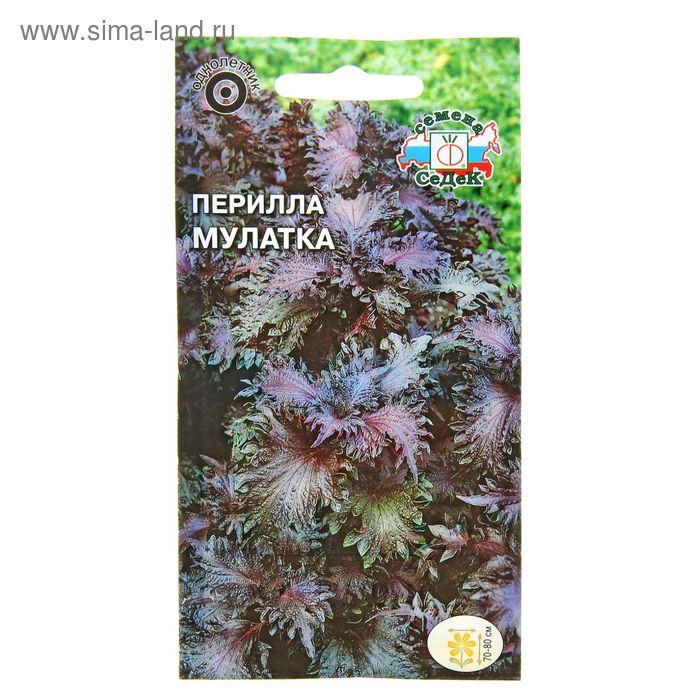 Семена цветов Перилла Мулатка кустарниковая, пурпурная 0,1 г.