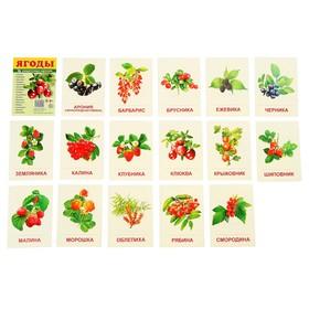 """Карточки обучающие """"Ягоды"""" 16 шт., с текстом 6,3х8,7 см"""