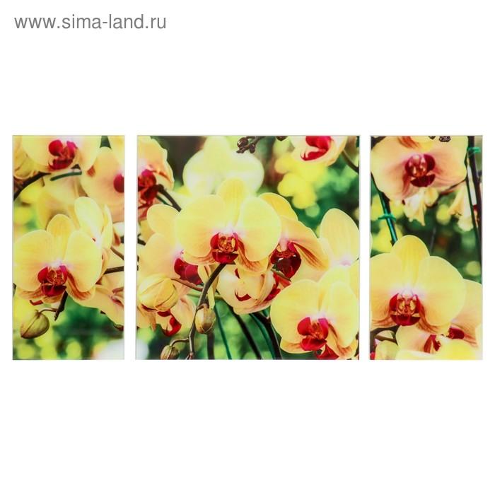 """Модульная картина на стекле """"Солнечные орхидеи"""""""