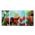 """Модульная картина на стекле """"Тюльпаны"""", 2 — 25×50, 1 — 50×50 см, 100×50 см"""