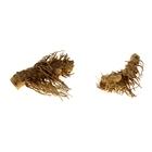 "Коряга натуральная ""Корень бамбука"" для декора, UDeco Bamboo hair root S, размер 10-20 см, 1 шт"