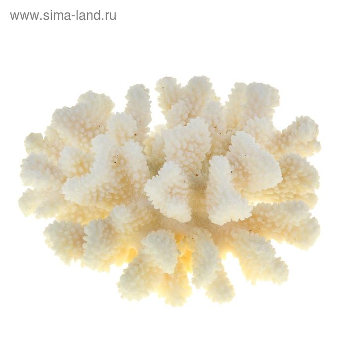 Коралл пальчиковый среднего размера для оформления аквариумов, UDeco Finger Coral M 1 шт