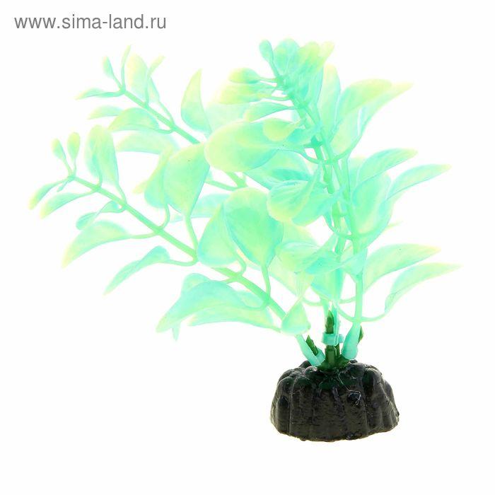 Растение, светящееся в темноте, 10см, Plant 57
