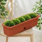 Балконный ящик 60 см с поддоном, цвет терракотовый