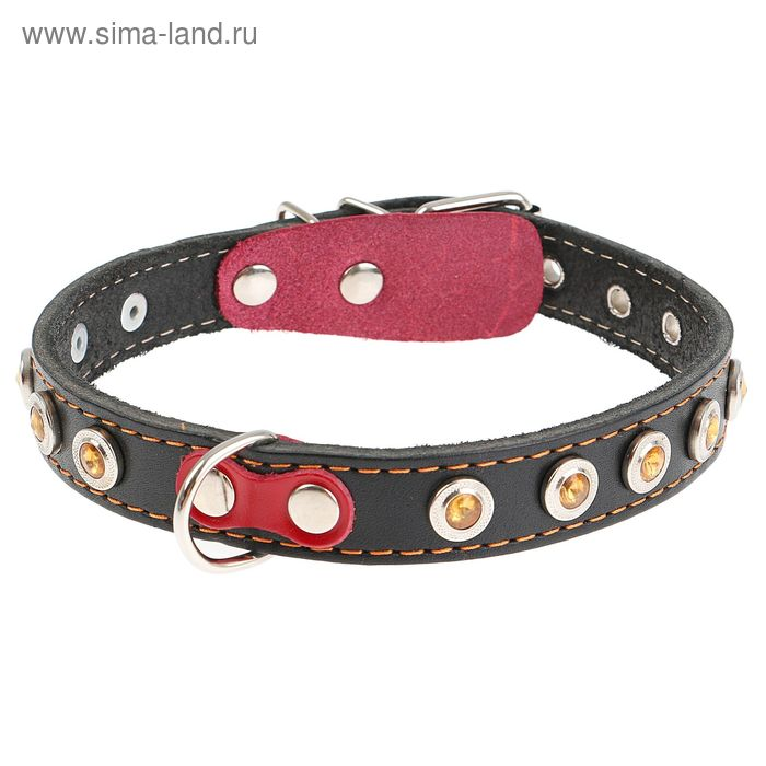 Ошейник кожаный однослойный, 49 х 2 см, украшенный, с выносным кольцом  микс цветов