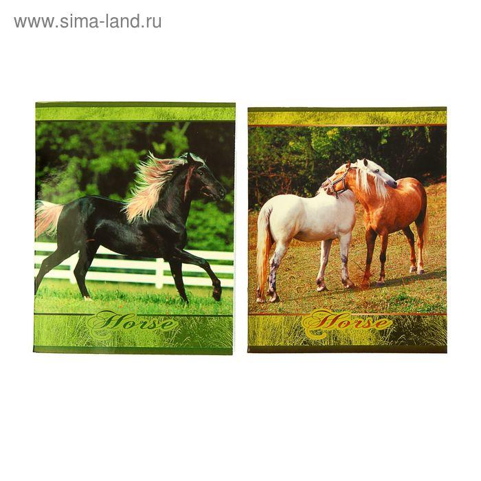 """Тетрадь 48 листов клетка """"Лошади"""", картонная обложка, сплошной УФ-лак, МИКС"""