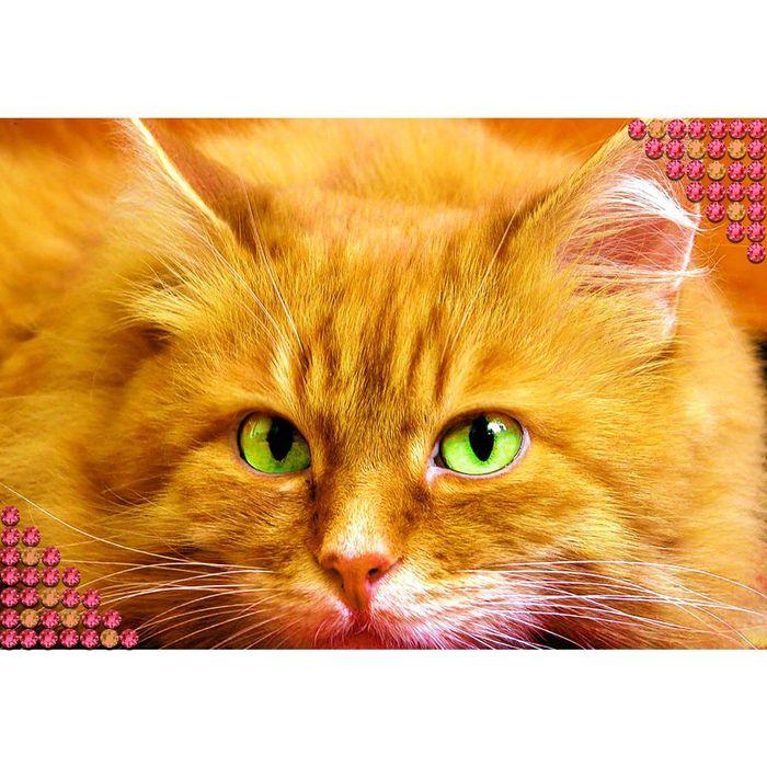 """Алмазная вышивка квадратными стразами с полным заполнением """"Кот"""""""