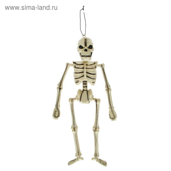 Скелет на подвесе