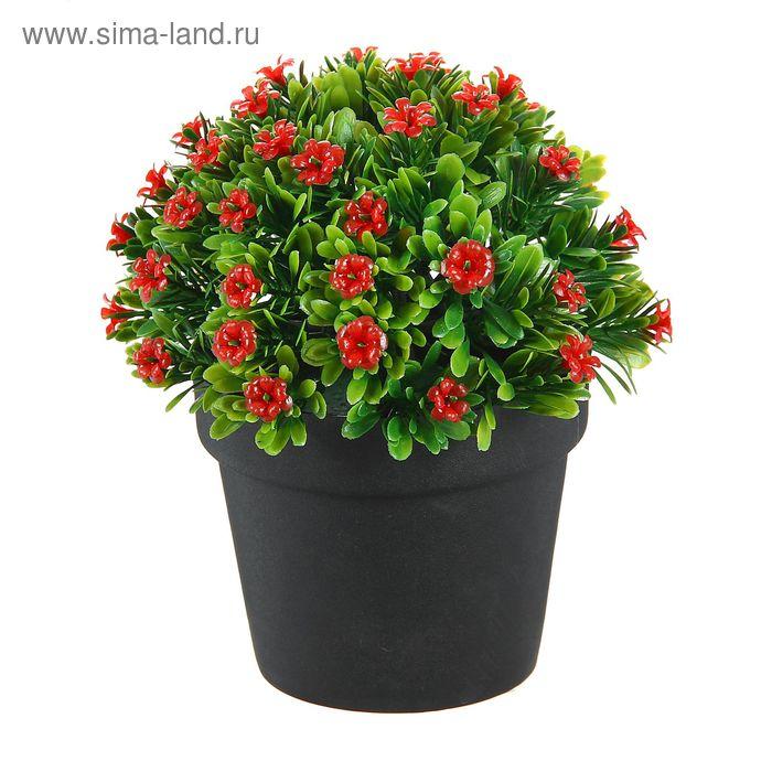"""Бонсай """"Травка и цветы"""" микс"""